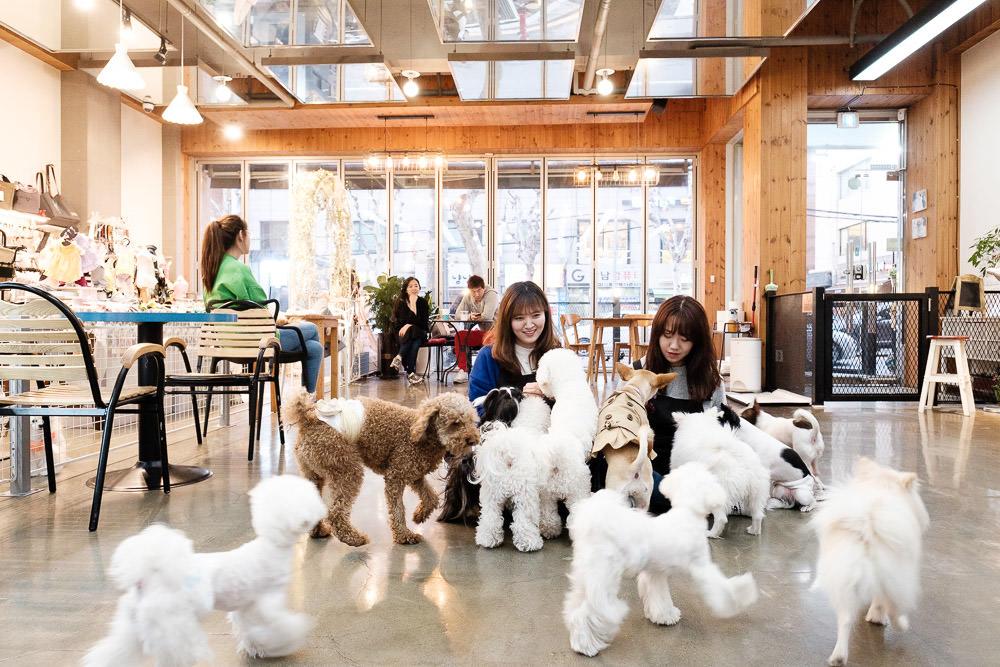 Seoul Editorial Photographer - BBC Storyworks